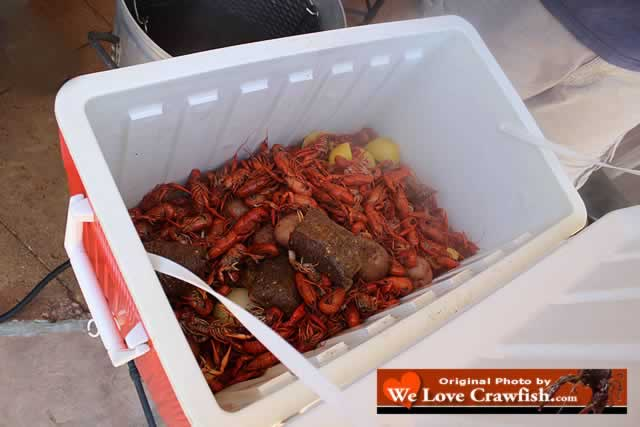 Hot boiled Louisiana crawfish in chest to stay hot