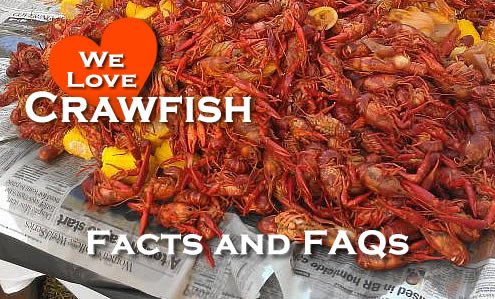 Crawfish Facts and Frequently Asked Questions