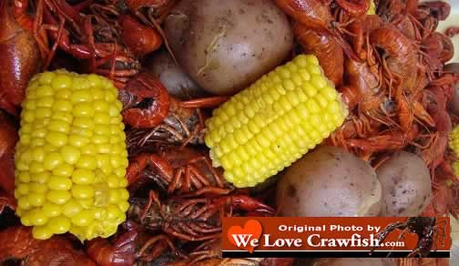 Boiled Louisiana crawfish, corn on the cob, and new potatoes, hot out of the boiler