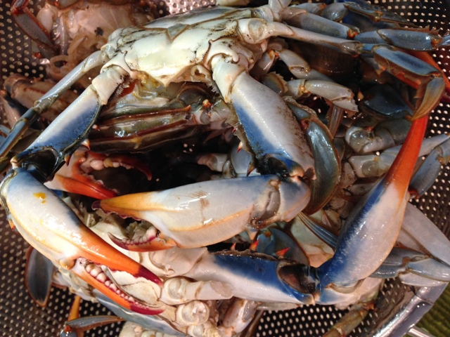 Fresh, Louisiana Blue Crabs, a prime ingredient in Louisiana seasfood gumbo