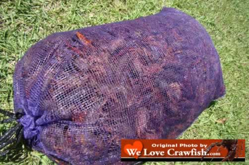 A sack of fresh, live Louisiana crawfish, right out of the swamp or off the crawfish farm!